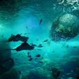 魚の大水槽